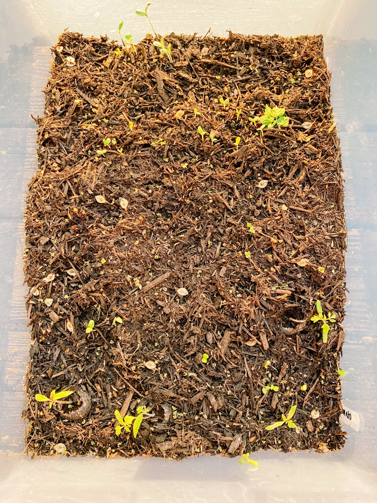 Raised Bed Garden Update
