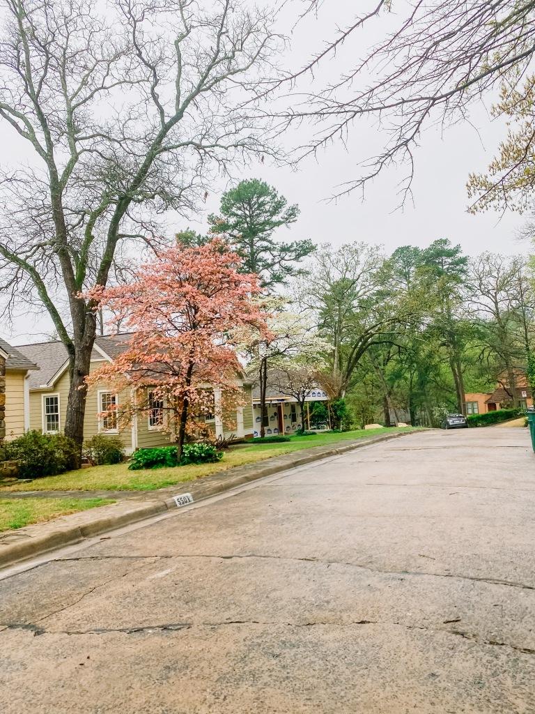 Spring has Spring in Arkansas